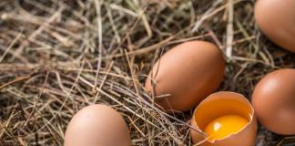 Jajka bio na wielkanoc
