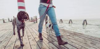 Jak chodzić efektywnie