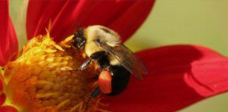 Pszczółka na kwiatku