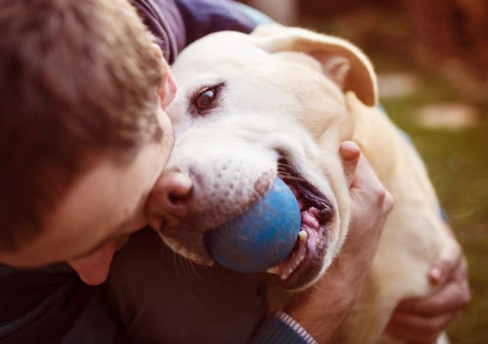 Inteligentna piłka dla psa