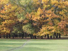Zwiedzanie Warszawy w weekend - park