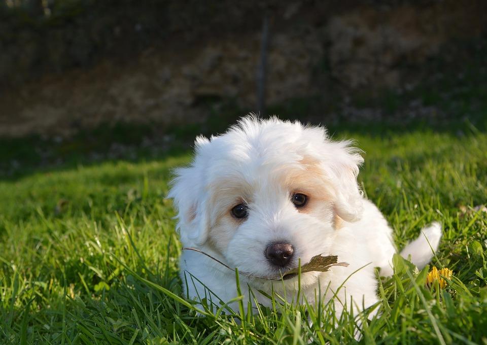 Biały szczeniak na trawie