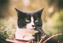 Czarno biały kot na zielonym tle