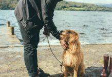 Pies z opiekunem na spacerze