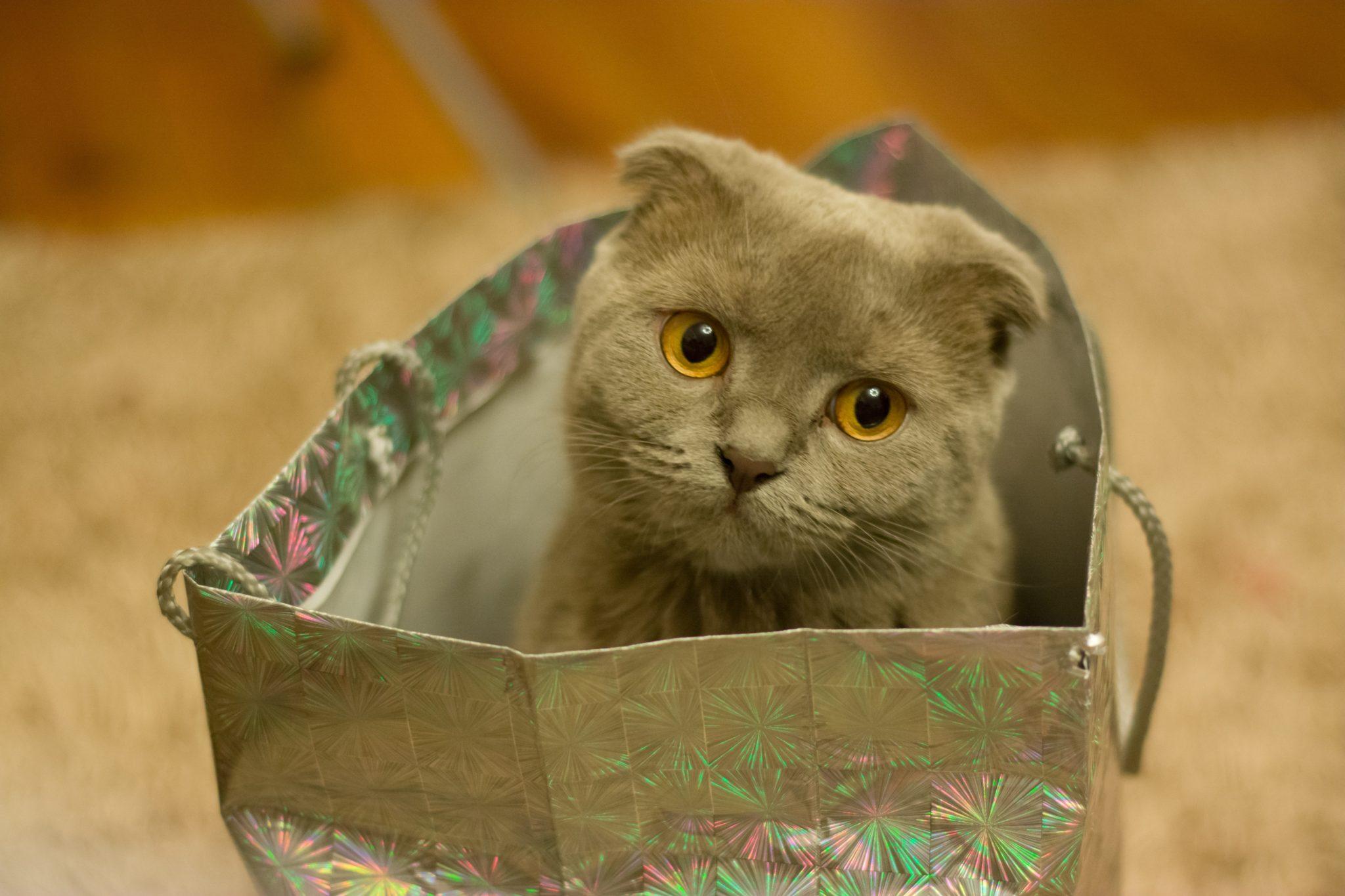 Słodki kociak w torebce prezentowej