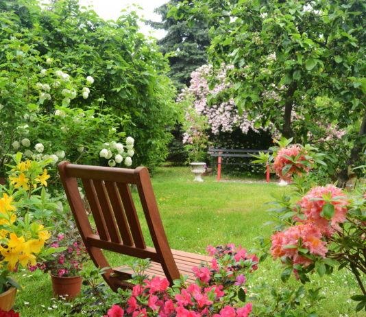 Zadbany ogród