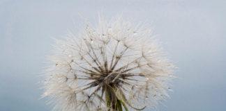 Jak przeciwdziałać alergiom