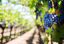 trudności w imporcie wina