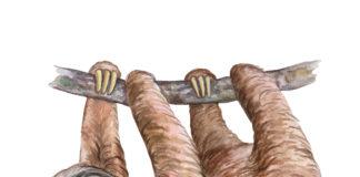 Leniwiec nawiązujący do okładki książki Jak mniej myśleć. Dla analizujących bez końca i wysoko wrażliwych