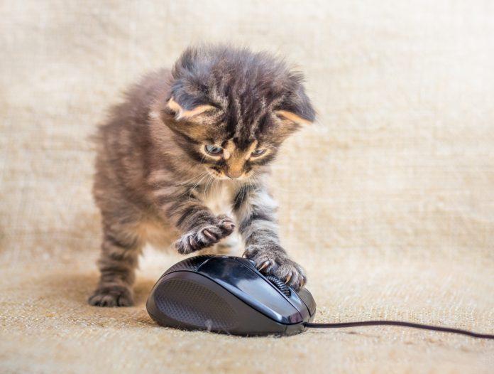 kot bawiący się myszką komputerową
