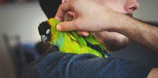 mężczyzna z papugą na ramieniu