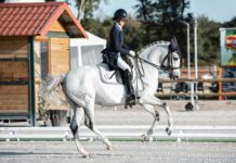 kobieta na koniu profesjonalna jazda konna