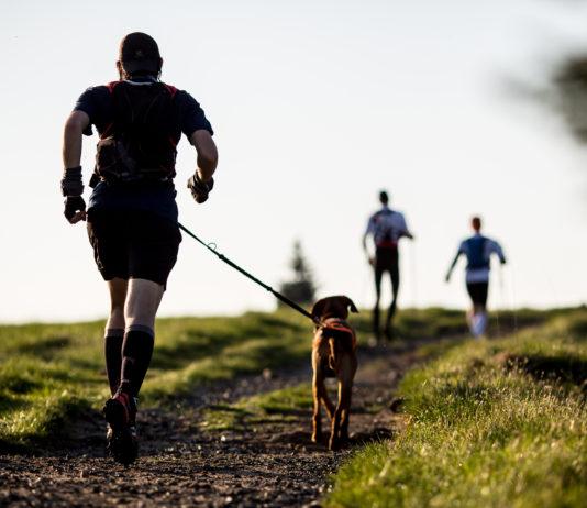 Dog-trekking