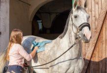 kobieta czyszcząca konia