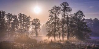 jesienny poranek w Puszczy Kampinoskiej
