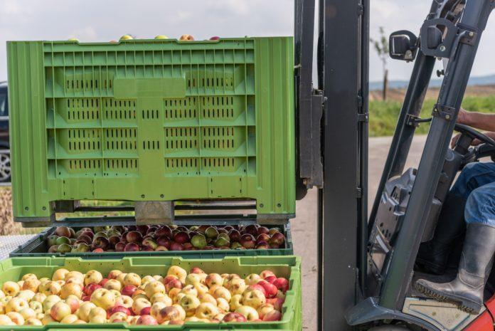 załadunek skrzyniopalet z jabłkami