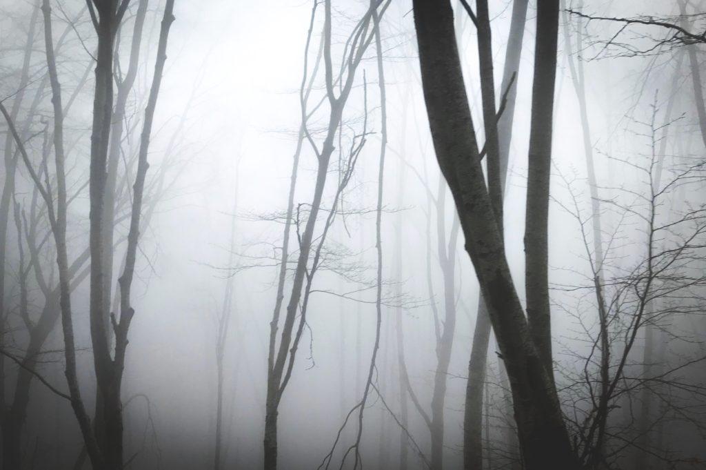 tajemniczy las w witkowicach