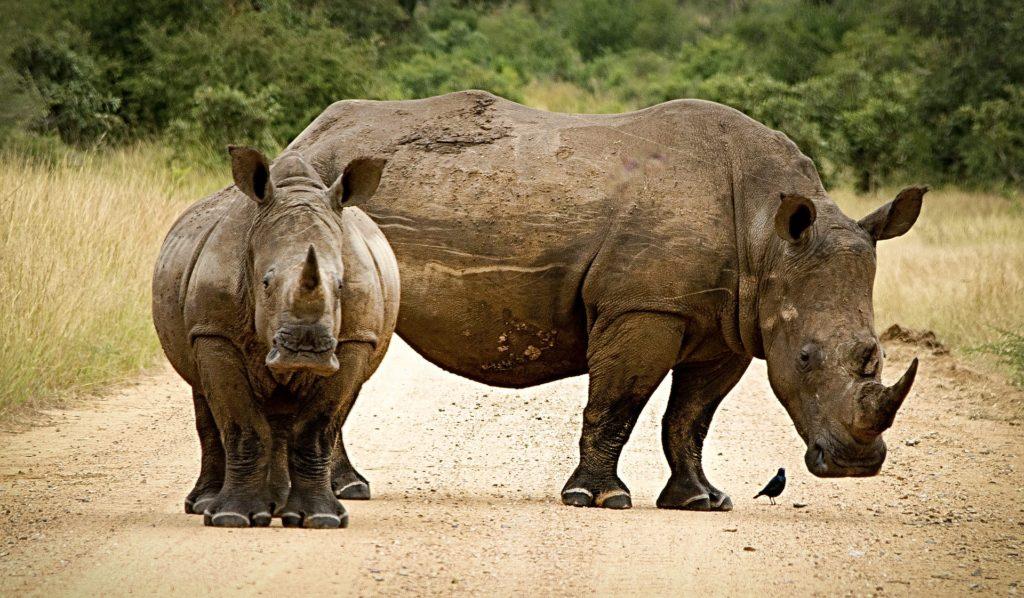 zimbabwe park narodowy nosorożce