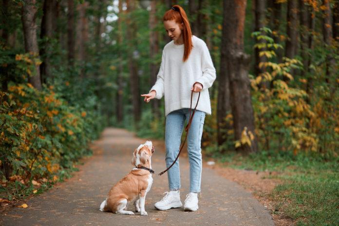 dziewczyna tresująca psa
