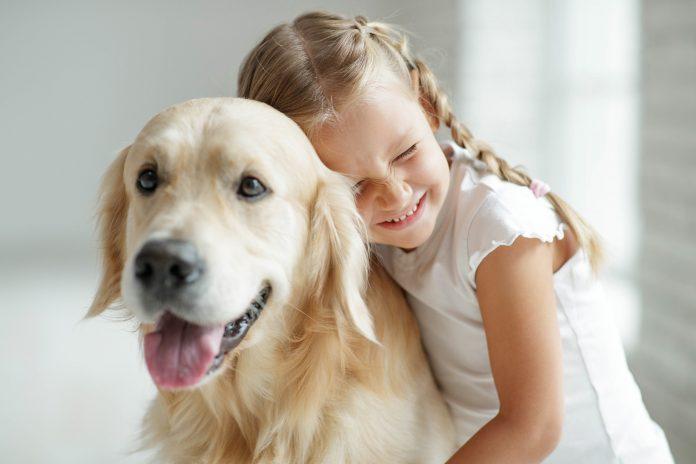dziewczynka z labradorem