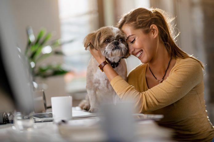 kobieta z psem shih tzu