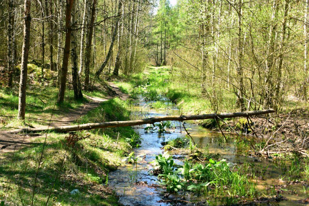 Rzeka Biała Przemsza, Pustynia Błędowska, Małopolski Park Krajobrazowy Orlich Gniazd