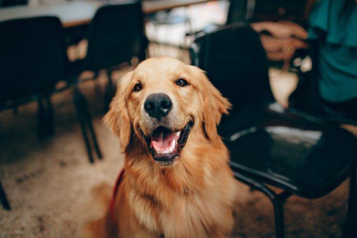 zadowolony pies