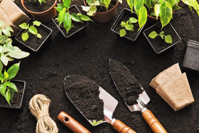 uprawa roślin doniczkowych