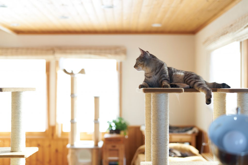 hotel dla kota