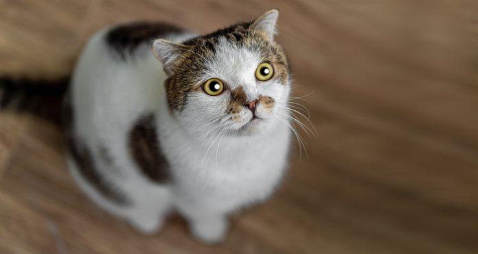 kot patrzący w górę