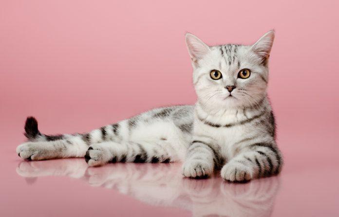 młoda kotka